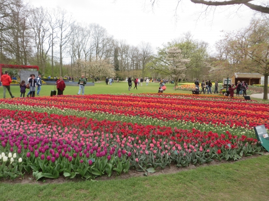 Blommor på Keukenhof Holland 22 april 2015